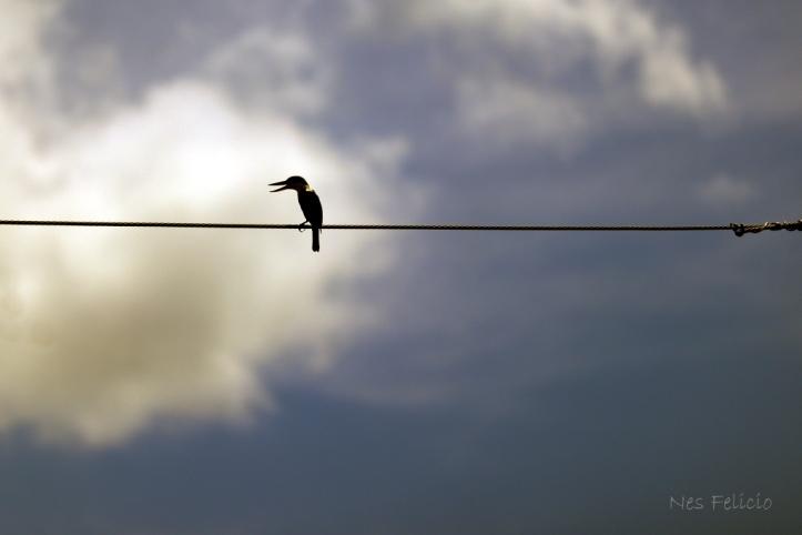 bird_1521