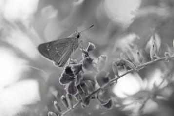butterfly_9847b