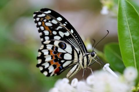 butterfly_0601