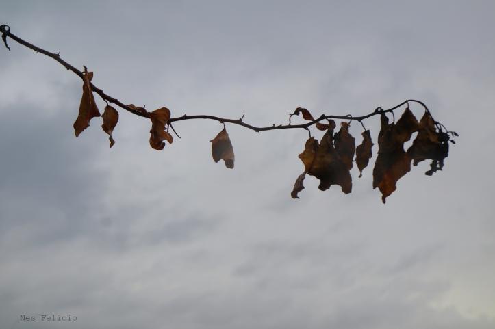 leaf_2279